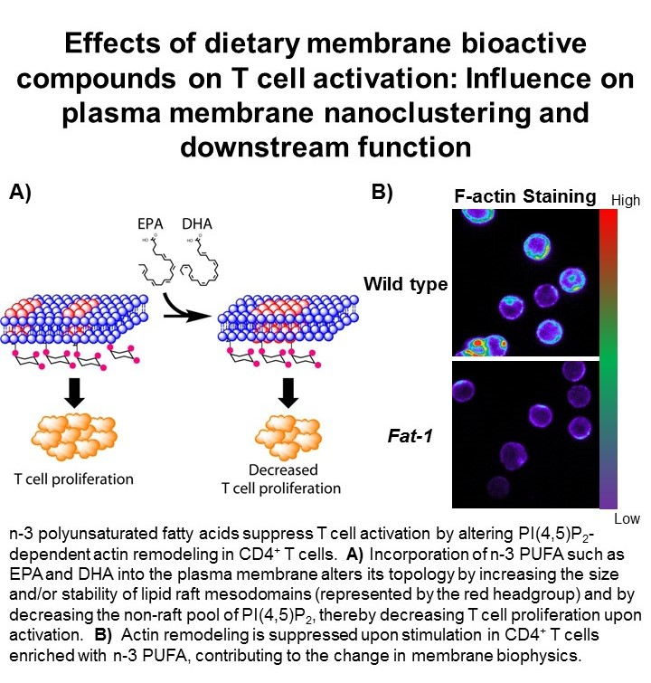 Effects of dietary membrane bioactive compounds on T cell activation: Influence on plasma membrane nanoclustering and downstream function