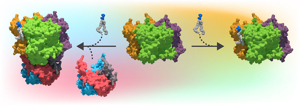 We are working towards understanding how lipids influence membrane proteins binding to soluble proteins.