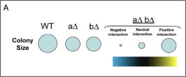 ResearchDiagram1