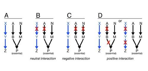 ResearchDiagram2